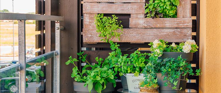 ¡Espacios verdes en el hogar y sus beneficios!